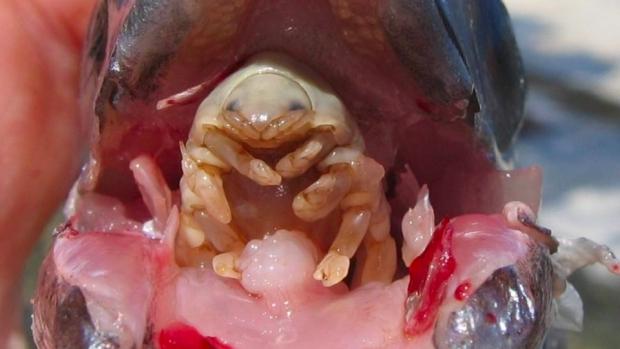 cancer mamar manifestari clinice papilloma virus allugola