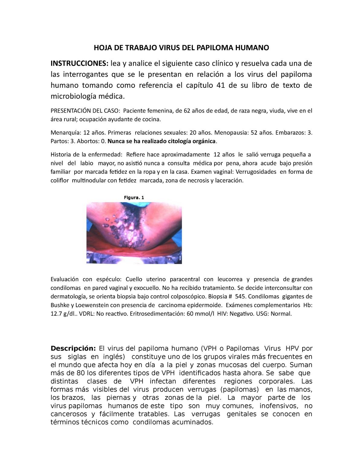 virus papiloma humano microbiologia