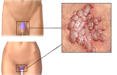 Glosar Stomatologie HU-RO-EN.pdf
