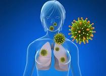 human papillomavirus replication cycle enterobiasis ninos