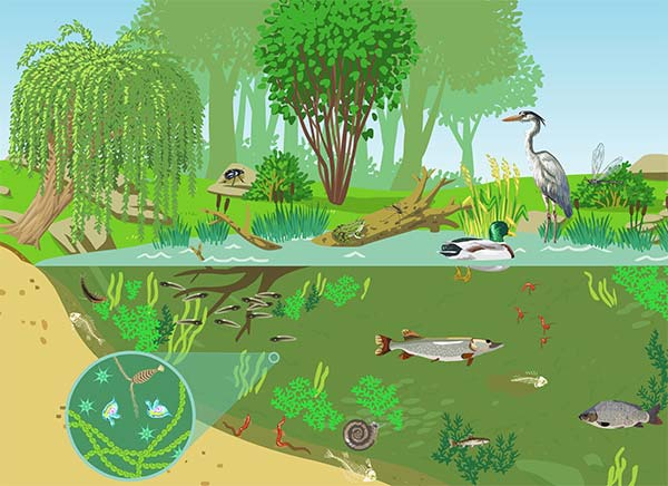 23 Exemple de parazitism la om și la animale
