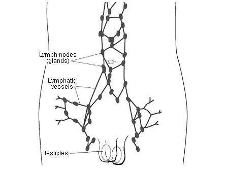 testicular cancer in lymph nodes