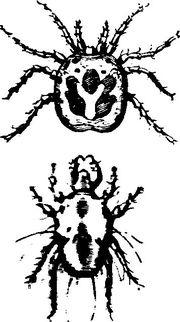 paraziti externi la pasari