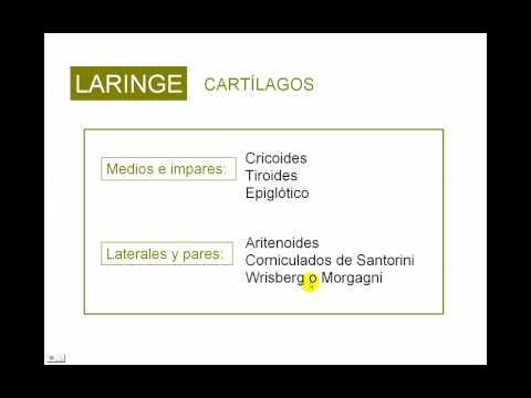 fisiopatologia cancer laringe