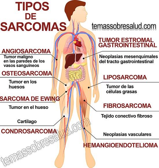 papillomavirus definition larousse