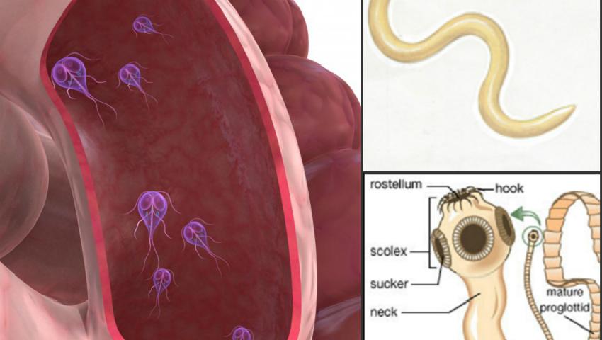 hpv alla gola enterobius vermicularis signs and symptoms