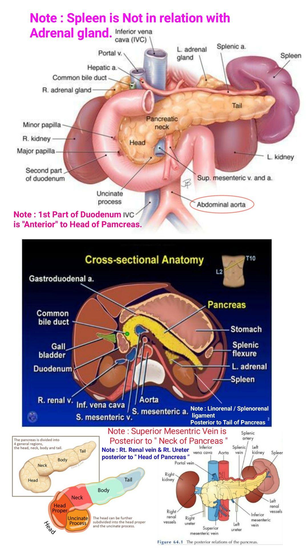 cancer pancreatic neck
