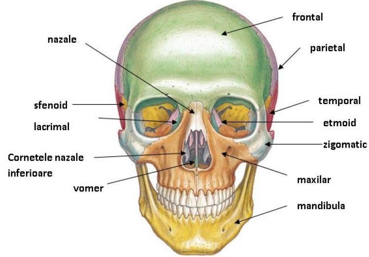 cancer maxilar