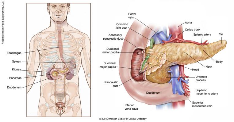 cancer pancreatic neck papilloma virus dei cani