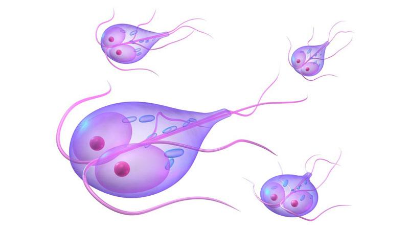 tratament paraziti giardia
