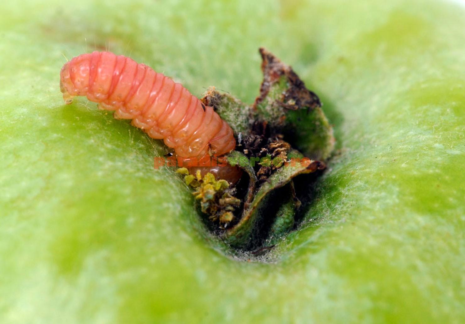 detoxifierea naturala a ficatului virus de papiloma humano tratamiento