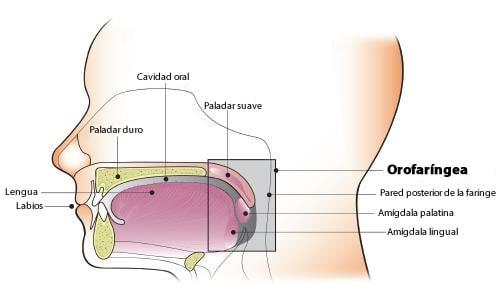 Varicele în canalul cervical