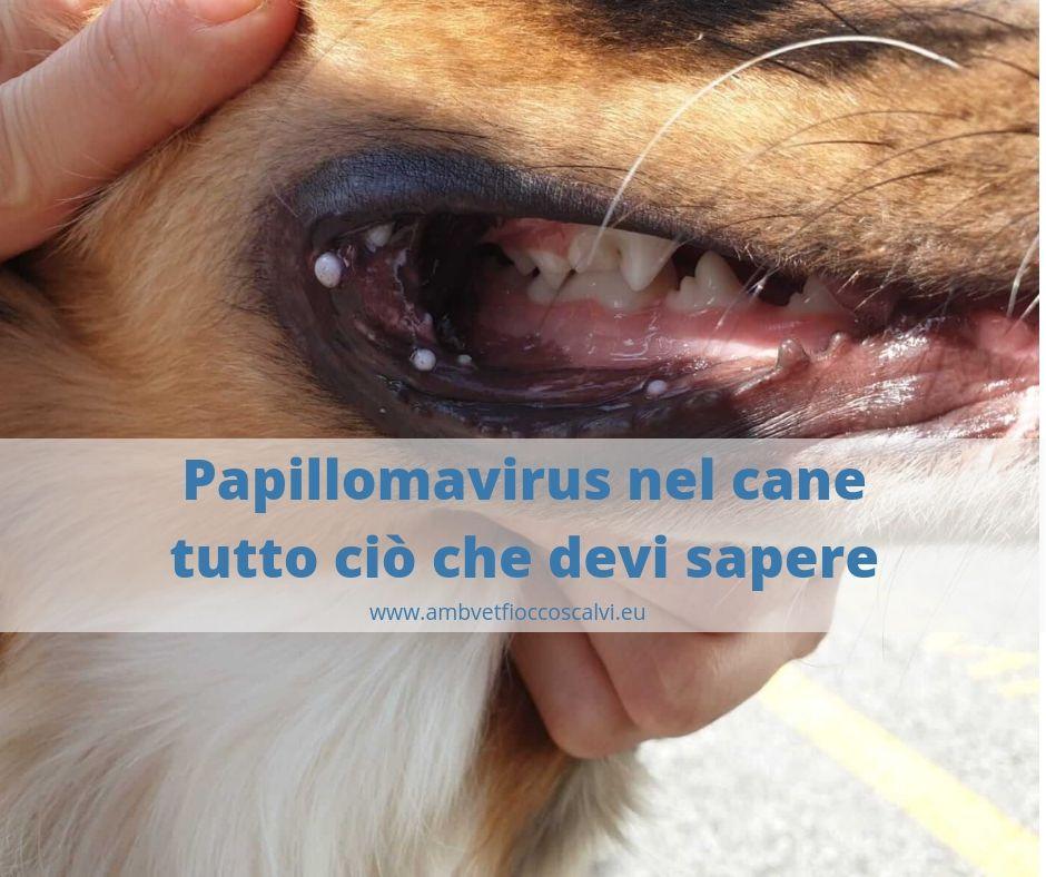 papilloma virus e terapia helminti plati