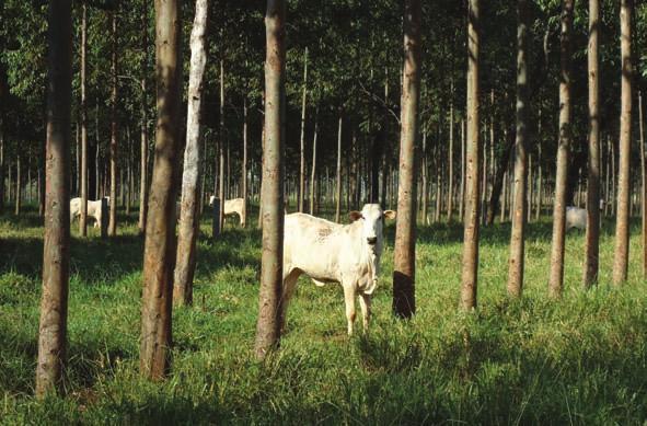 Finn bovină și carne de porc din carne: cum arată și ce este periculos? - Durere de gât December