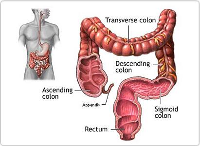 peritoneal cancer and immunotherapy 5 ciuperci comestibile