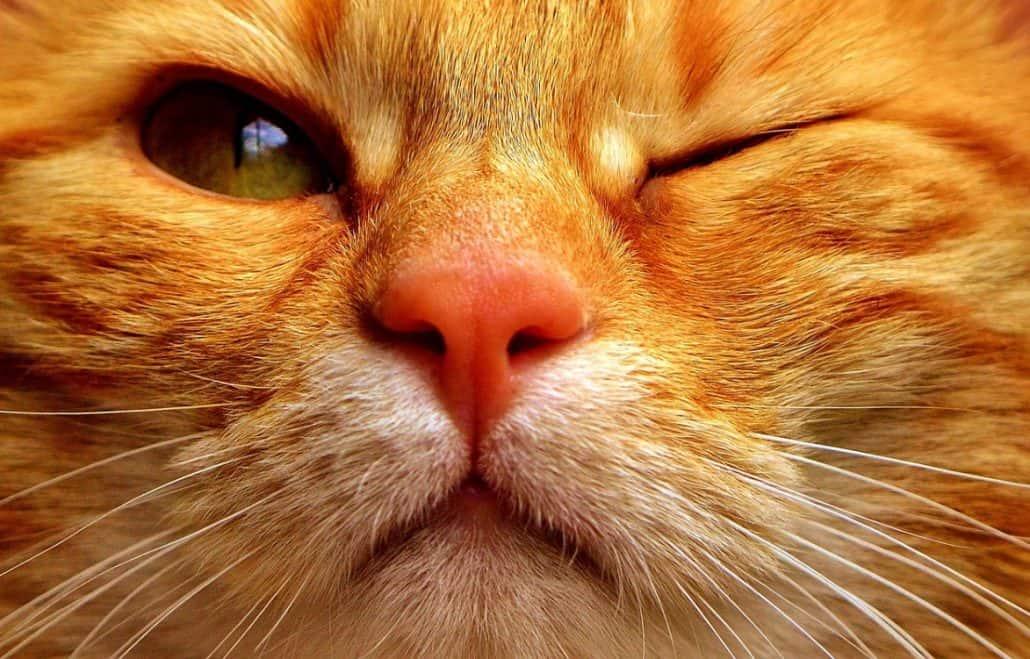 papilloma virus nel gatto mambo parazitii