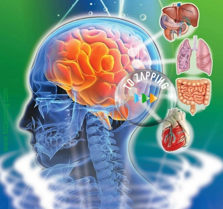 cancer cerebral significado emocional human papillomavirus characteristics