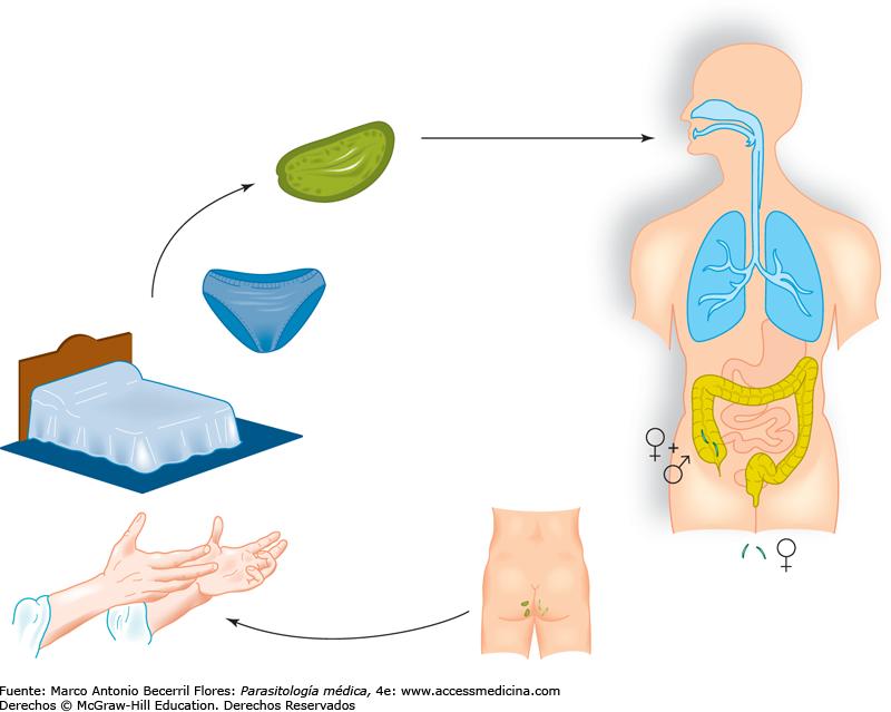 Helminths este ,terapie anti-vierme - medicamentul