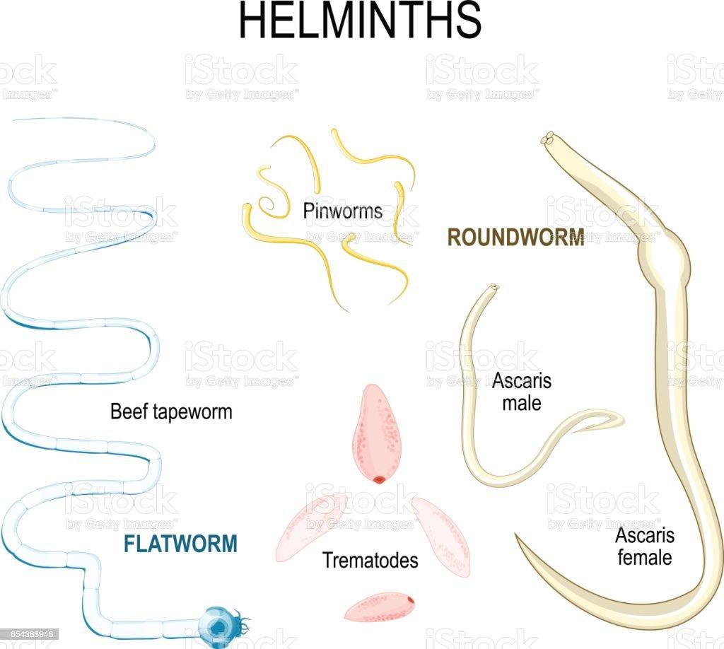 helminths tapeworm verruca foot toes
