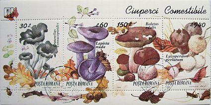(PPT) Ciuperci Comestibile / Otravitoare ppt   Cobuz Stefan - primariabeuca.ro