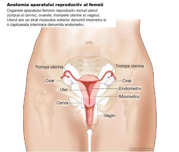 Cancerul ovarian