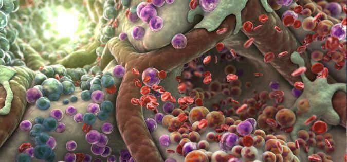 anemie u batolat