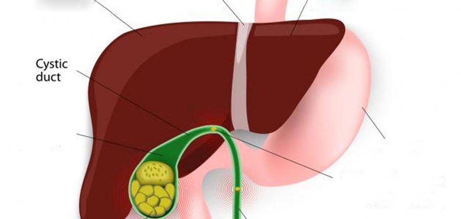 hpv virus microbiologia detoxifiere de zahar