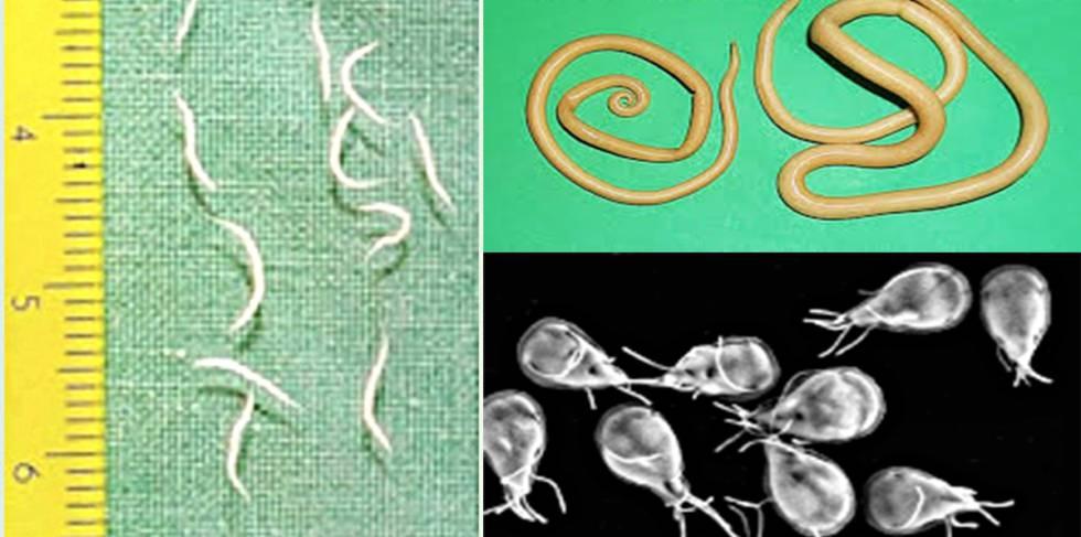 endometrial cancer uptodate herpes genital y papiloma humano