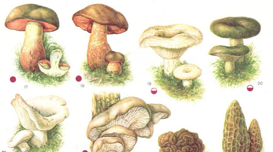 ciuperci copii 2 ani