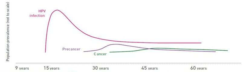 association of hpv and cervical cancer cancer de prostata rastreamento