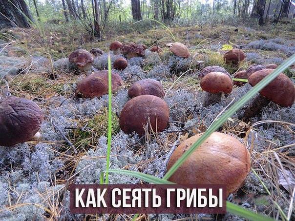 ciuperci expirate