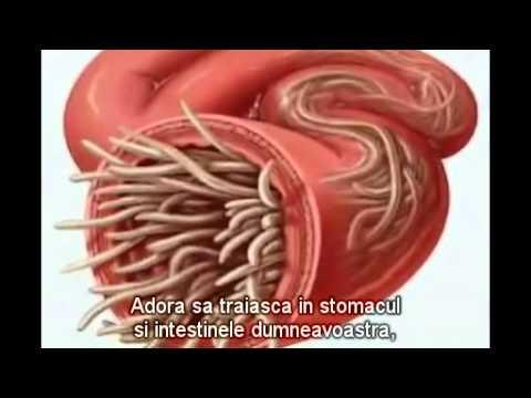 viermi intestinali giardia