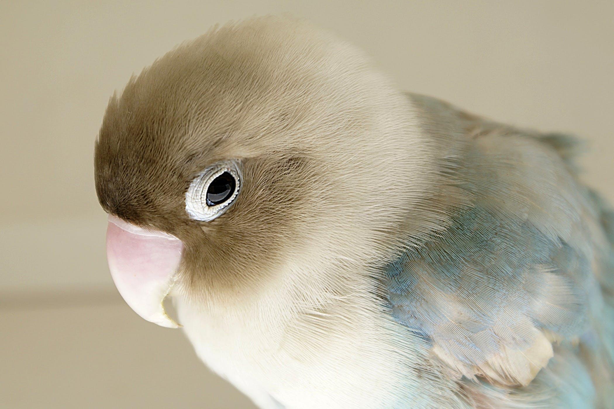 papillomavirus in birds