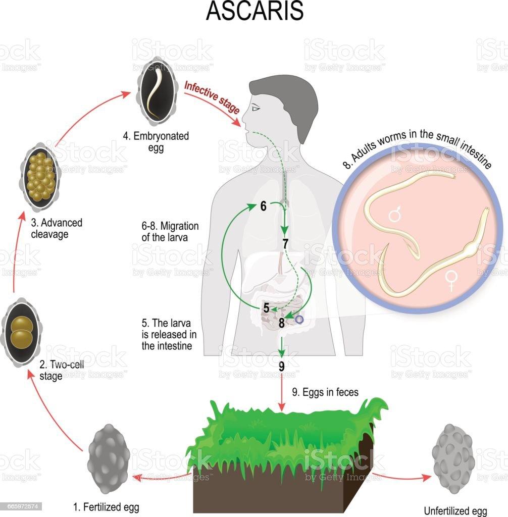 parazitii citate celebre cancer facial simptome