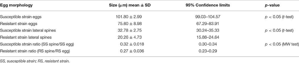 schistosomiasis incubation period