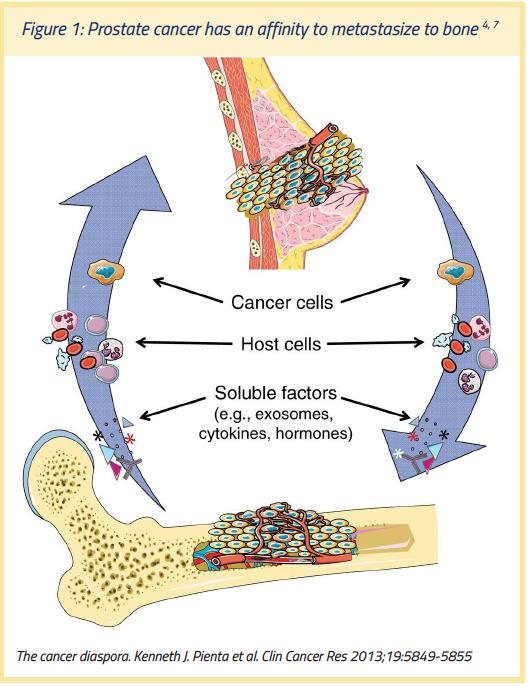 Leucocite crescute și prostate