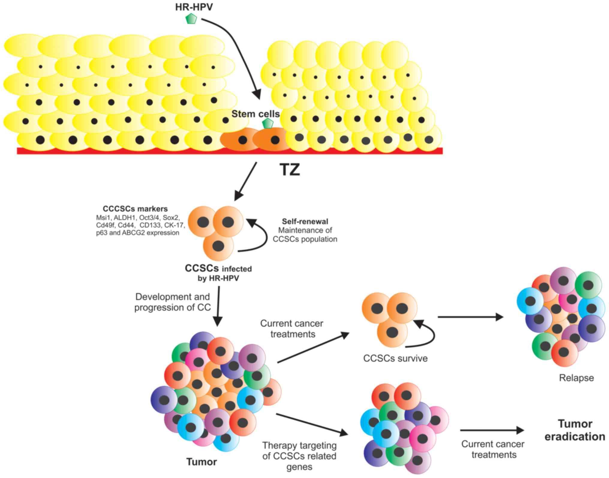 hpv virus and brain cancer cancer bila simptome