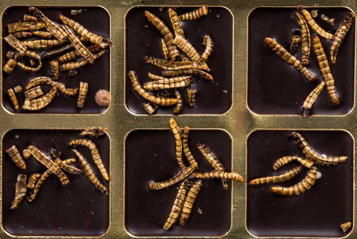 paraziti intestinali la om