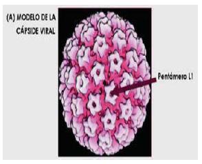 virus del papiloma bajo riesgo