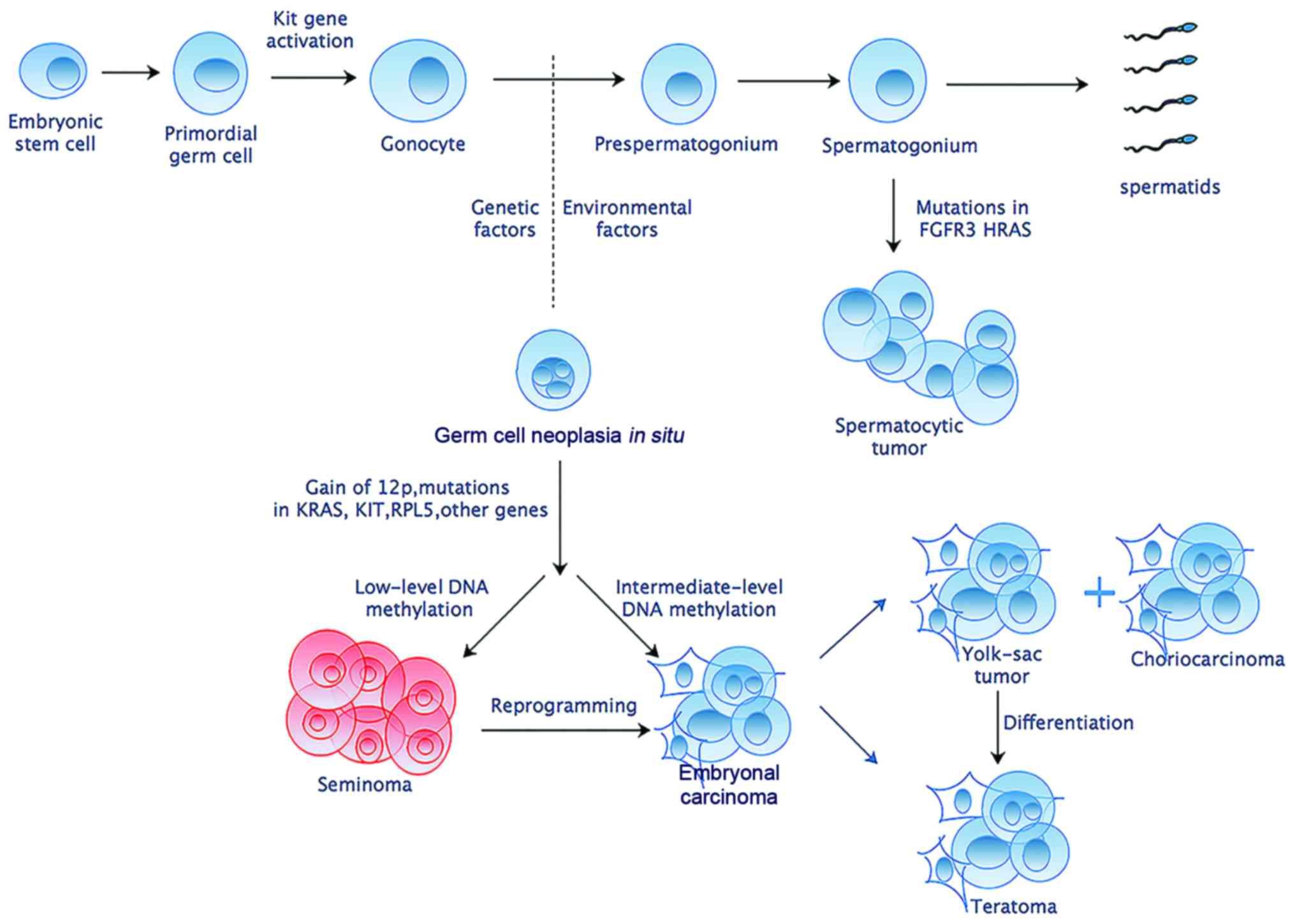 Cancerul si fertilitatea