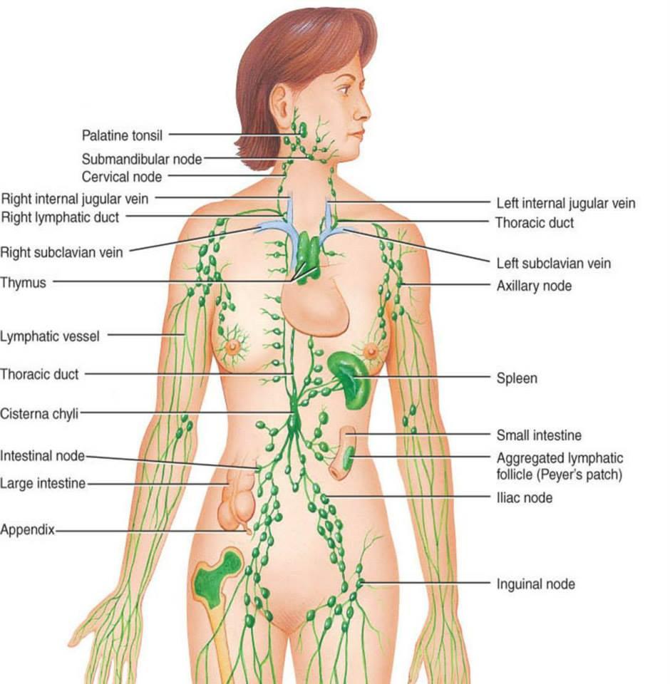 Drenaj limfatic | ImunoMedica