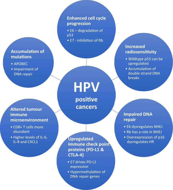 ano ba ang human papillomavirus
