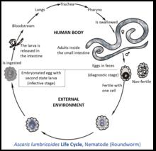 warts genital treatment home papilloma virus allugola