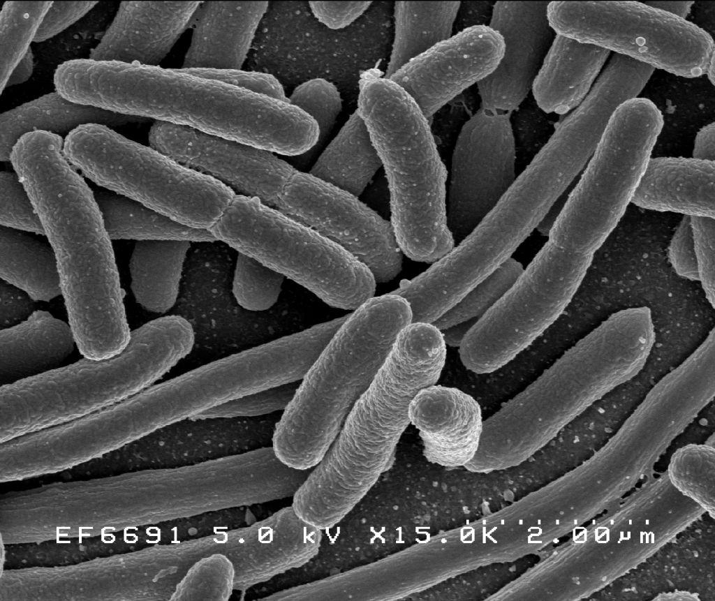 bacterii simbionte