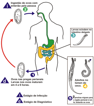 treatment for squamous papilloma soigner papillomavirus chez lhomme
