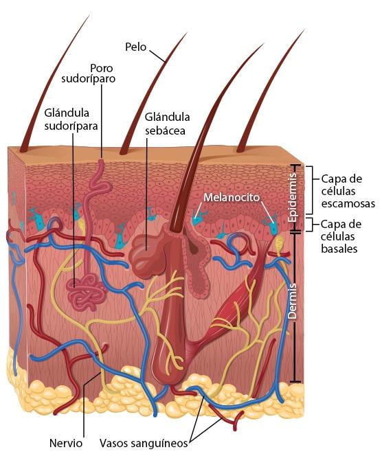 analize de sange paraziti helmintox italia
