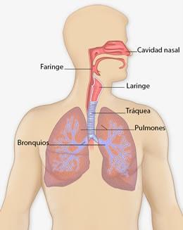 cancer laringe en ingles