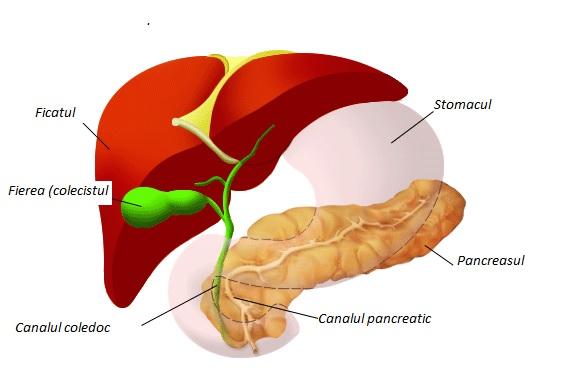 De ce este cancerul pancreatic o boala atat de agresiva? | Medlife