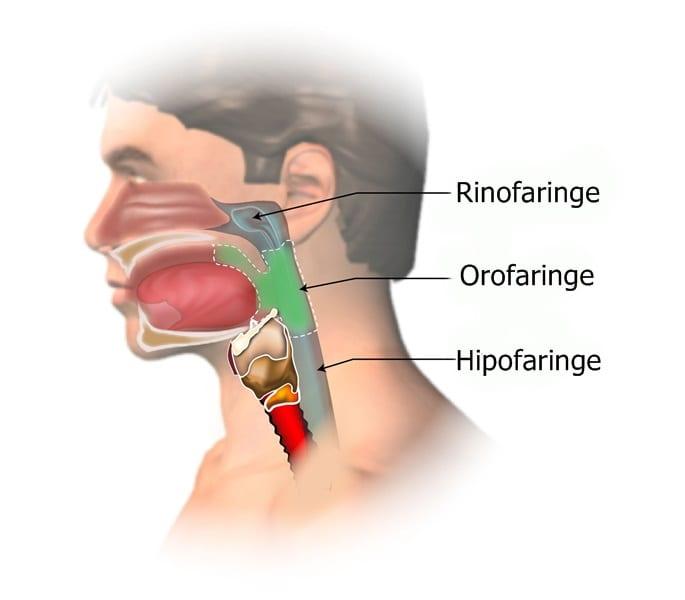 anthelmintic description papillary thyroid cancer metastasis to brain