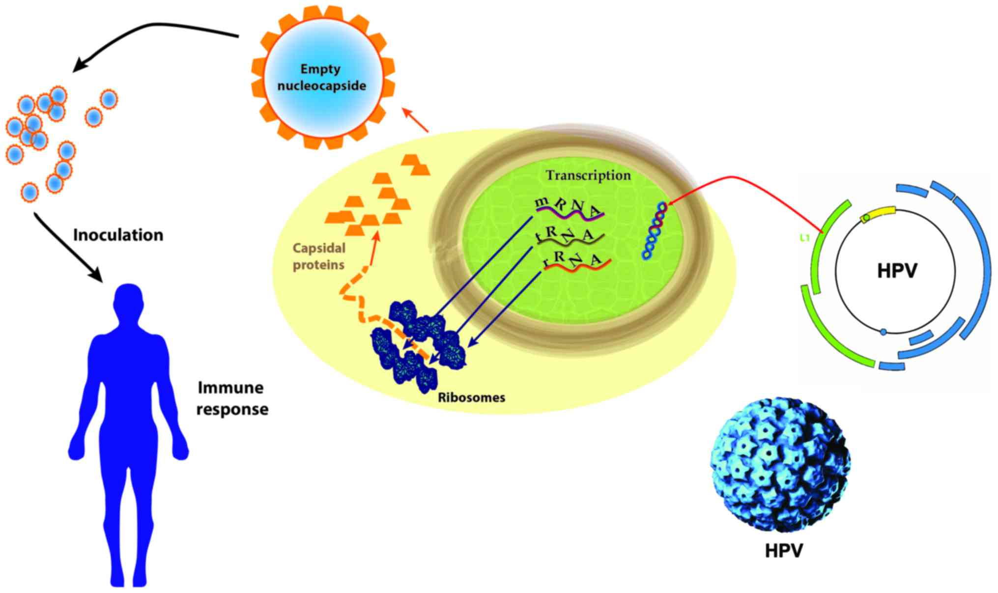 human papillomavirus in legs